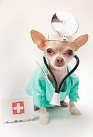 Лечение кислородно-аргоновыми смесями в ветеринарии
